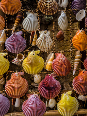 Bunch of colorful sea shells - home made decoration