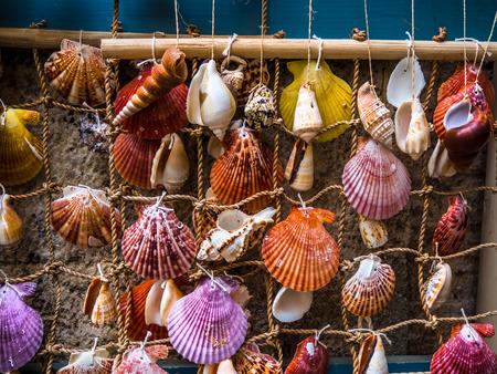 Various beautiful colorful sea shells on display - homemade decoration