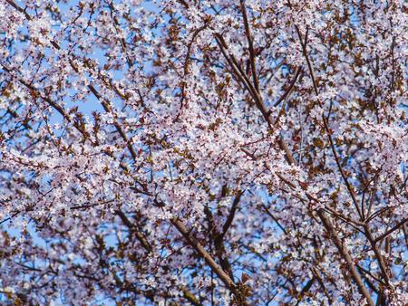 Tree canopy in full bloom- full of gentle white tiny flowers
