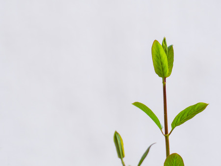 Fresh green young plant on a white background