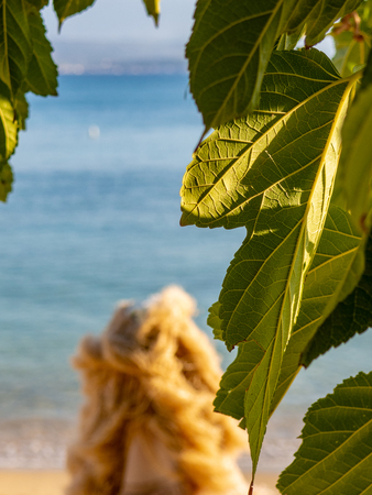 Closeup of beautiful fig leaf with calm beach and sea in the background
