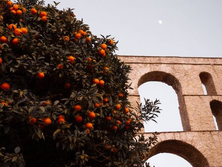 Orange tree full of fruit in front of ancient roman aqueduct Stock Photo