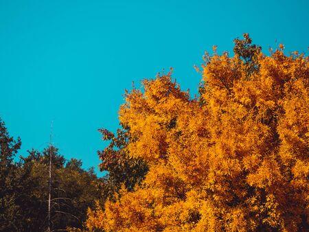 Trees in autumn season - blue sky background Фото со стока
