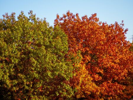 Green and orange trees canopies in autumn
