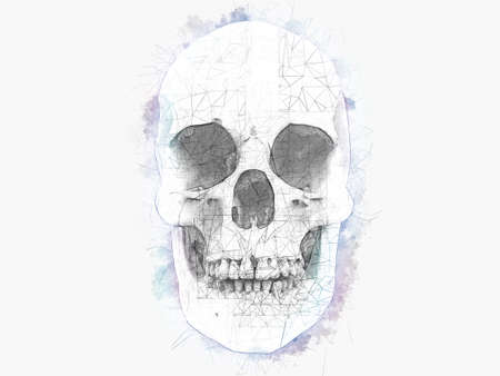 Human skull - water color and technical pencil drawing