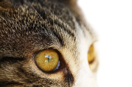 Close up macro cat`s eye, isolated on white Stock Photo - 5569530
