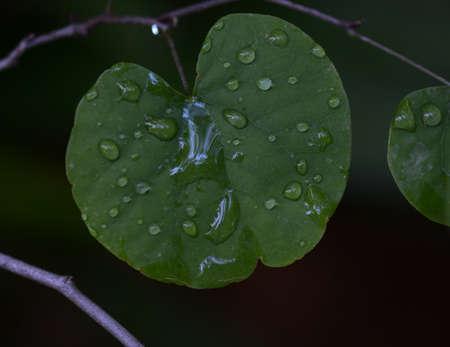 Water droplets Reklamní fotografie
