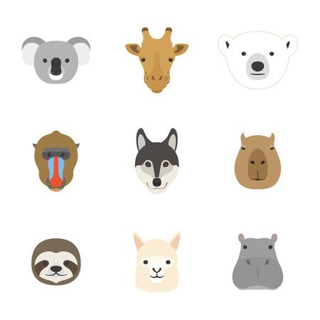 oso perezoso: Conjunto de cara Animal