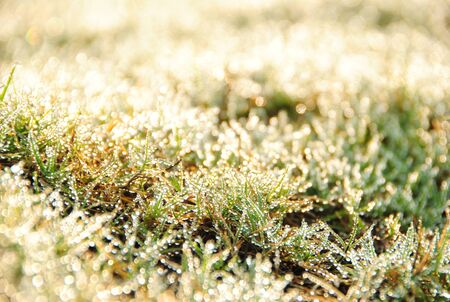 dewdrop: dewdrop on grass in early morning Stock Photo