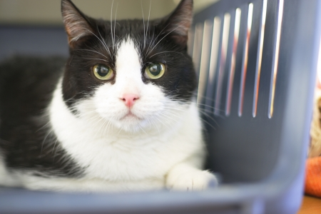Cat in shelter, a natural portrait with shallow DOF