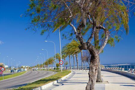 Sunny tree-lined boulevard by the sea, Mallorca, Spain
