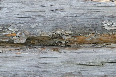 calibrated: Horizontal Texture Of The Old Peeling Logs. Background.