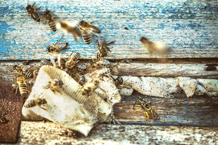 removed: Bees At The Entrance To The Hive Was Removed Wasps. Close-Up. Macro. Deep Of Field. Vintage, Grunge Version. Stock Photo