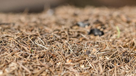 Dry Fur-Trees, Pine Needles On Concrete. Shallow Depth Of Field. Close-Up. Macro.