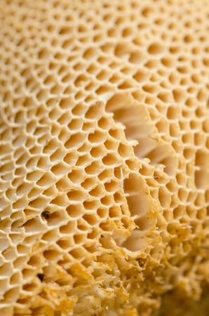 Texture Of A Tubular Mushroom. Shallow Depth Of Field. Close-Up. Macro.