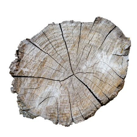Log In A Cut On A White Background. Isolation. Texture, Background Series. Archivio Fotografico