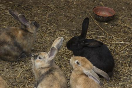 pet breeding: Rabbit in a farm