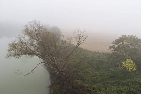 Mist on the Tiber river and trees photo