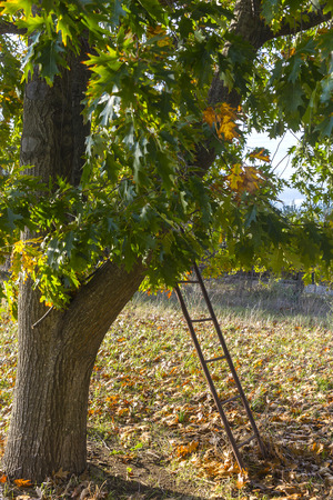 southern europe: Tree and ladder in southern europe countryside Stock Photo