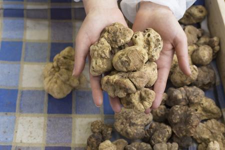 truffle: Italian white truffle Stock Photo