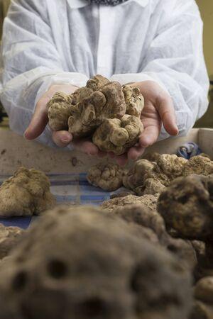 truffe blanche: truffe blanche italienne