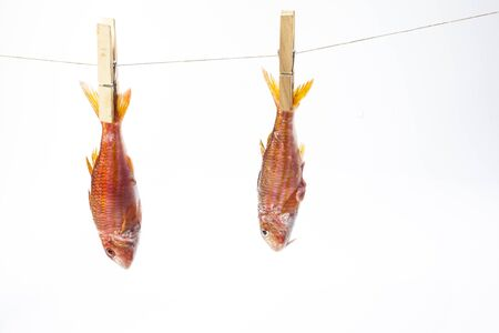Mullet fish hanged on a rope as clothes