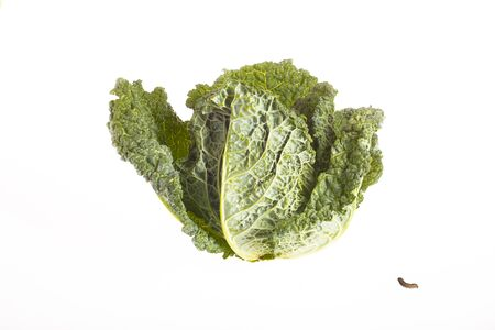 Cabbage and caterpillar isolated on white