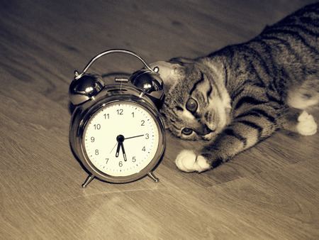 awake: Classic alarm clock and kitten laying on the floor in the morning Stock Photo