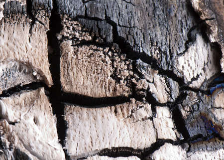 charred: Fire wood texture close up