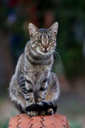 pussycat: cat resting