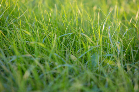 glades: lawn grass