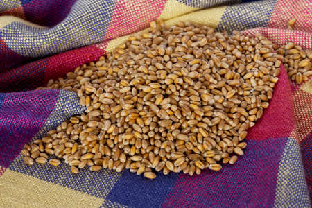 handful: a handful of wheat on the table