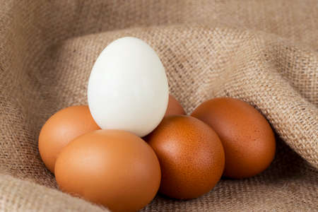 sacking: white and brown chicken eggs on the sacking
