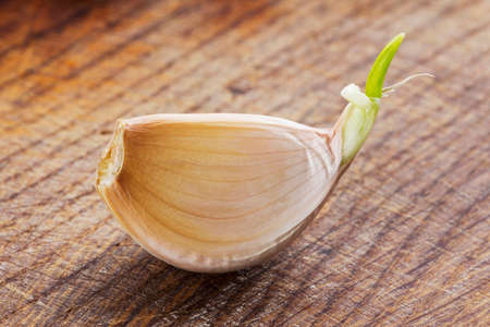 sprouting: sprouting garlic clove on a wooden table