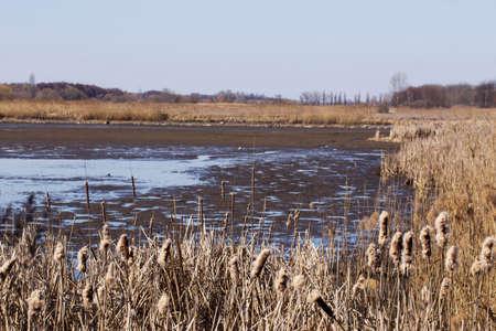 canne: un secco canne intorno al lago essiccato