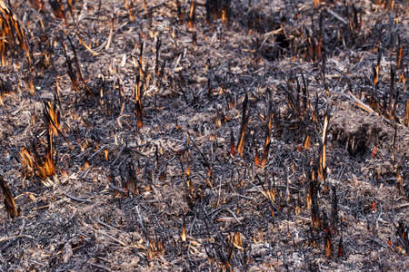 combust: ashes and burned grass on the ground