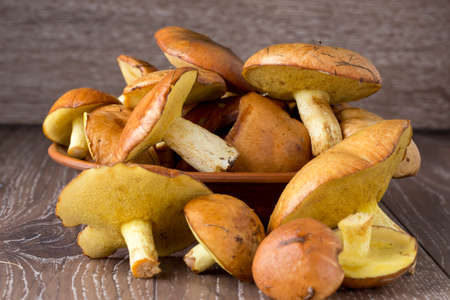the edible mushrooms on a wooden background