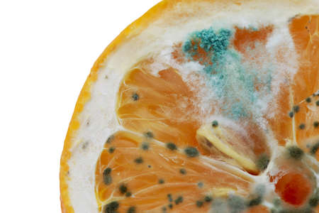 the green mold on a rotting lemon