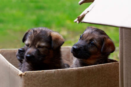 Two little puppies on the grass in a box Stockfoto