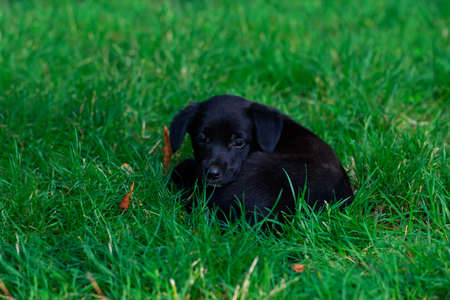 Portrait of nice puppy in the garden