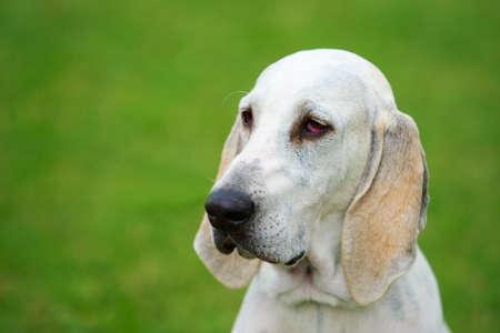 Portrait of nice Billy dog in the garden