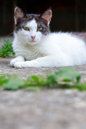 Beautiful cat resting outdoors in the open air
