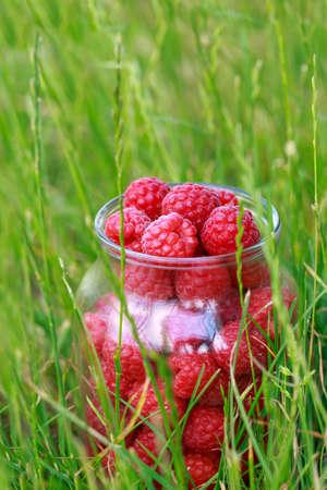Big beautiful ripe raspberries in a jar on green grass
