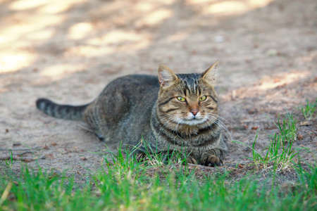 Big beautiful cat is resting in the fresh air Stock Photo