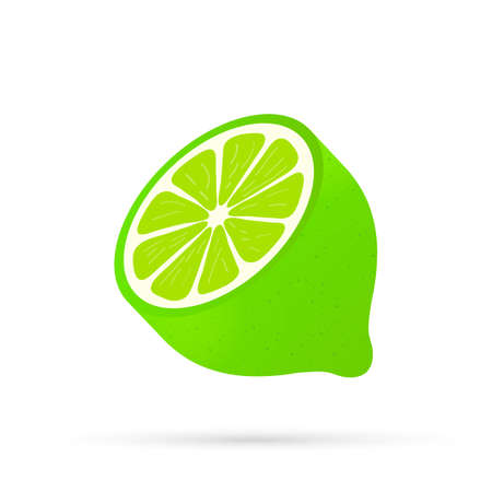 Lime with green leaves, slice citrus isolated on white background. Vector stock illustration. Illustration