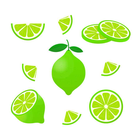 Lime with green leaves, slice citrus isolated on white background. Vector stock illustration.