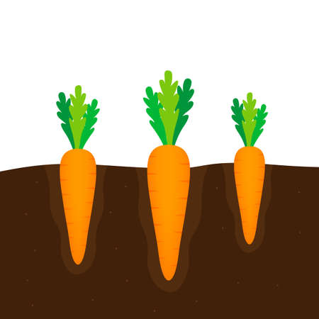 Carrot icon. Flat design on a white background. Vector stock illustration 矢量图像