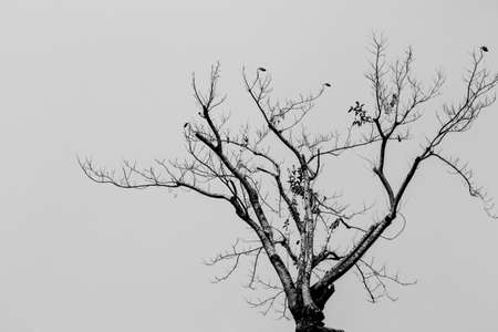 scarry: Dead tree in black and white scene