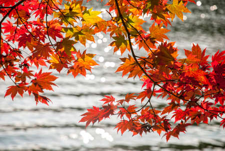 Red Maple Leaves and Lake Background photo