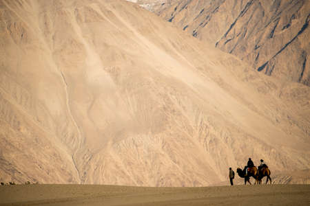 caravan travellers riding camels Nubra Valley Ladakh ,India - September 2014 photo